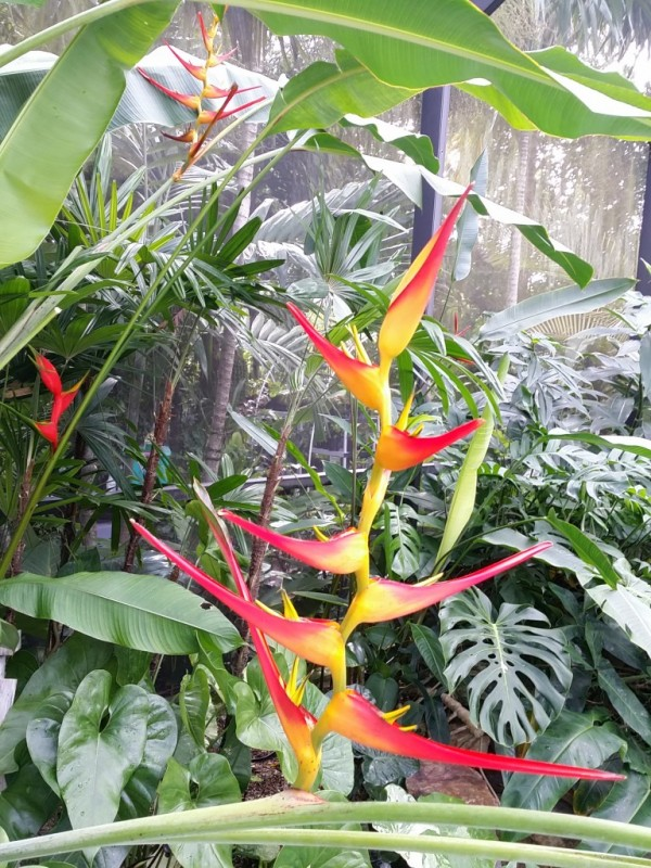 Tropical Plants and Tropical Flowers