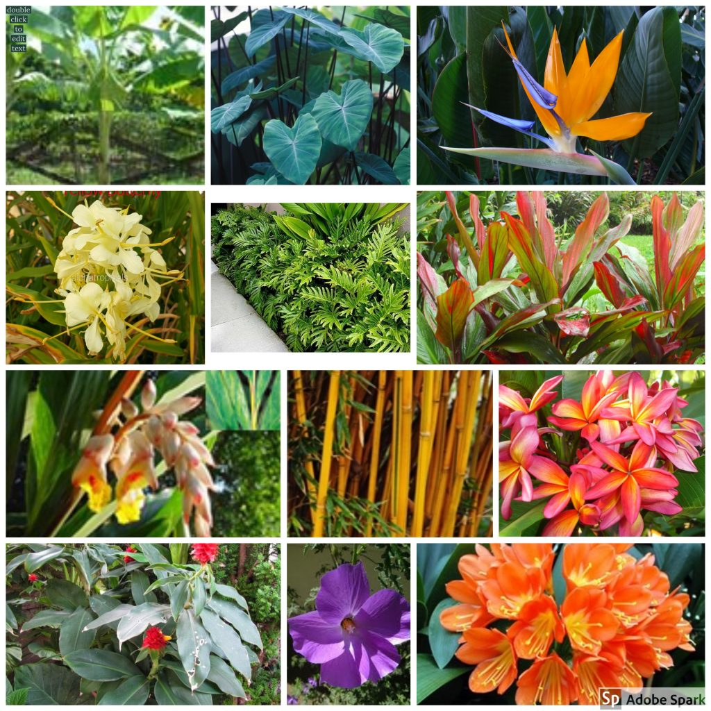 Tropical Plants And Flowers Growing Plants In Cooler Climates