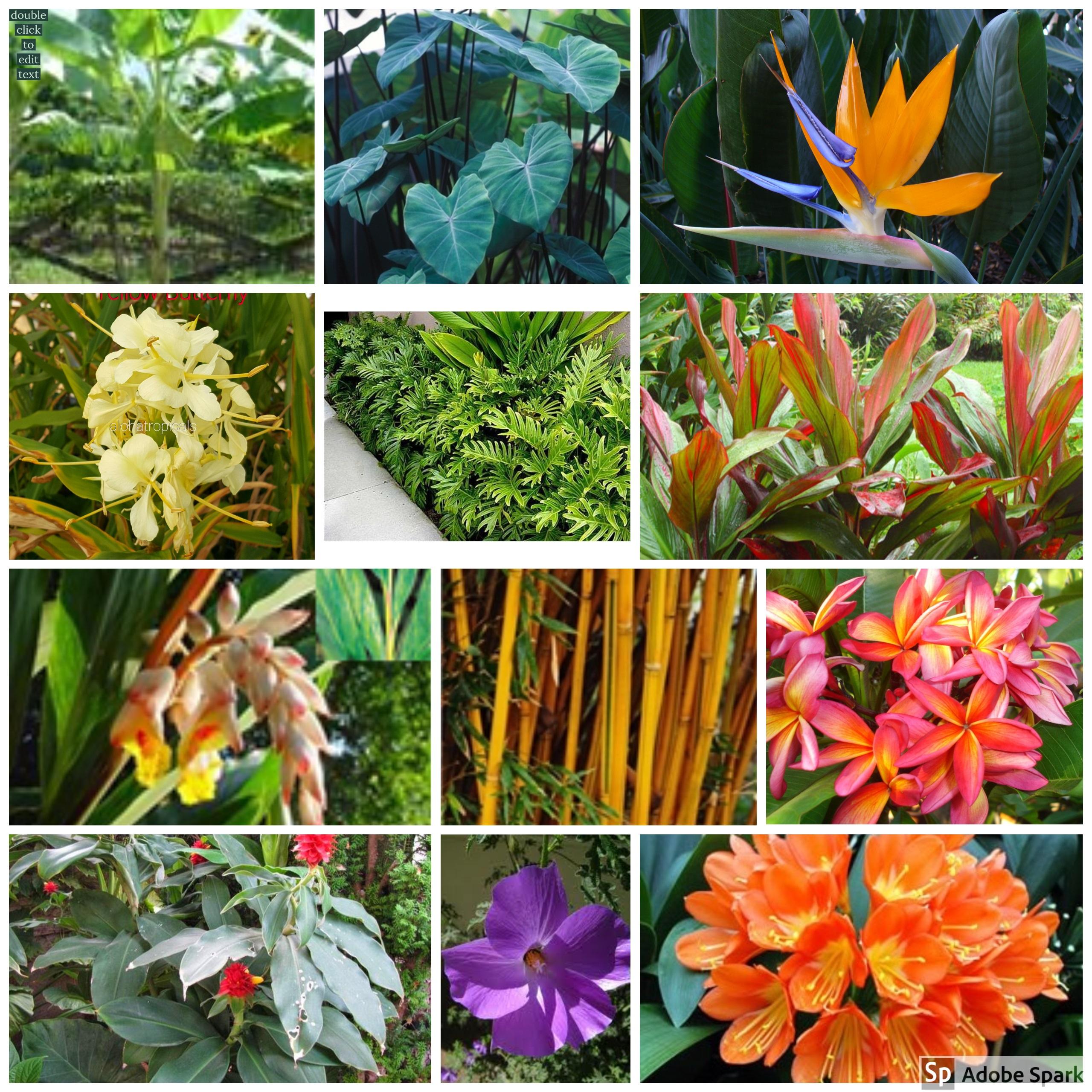 Aloha Tropicals Tropical Plants