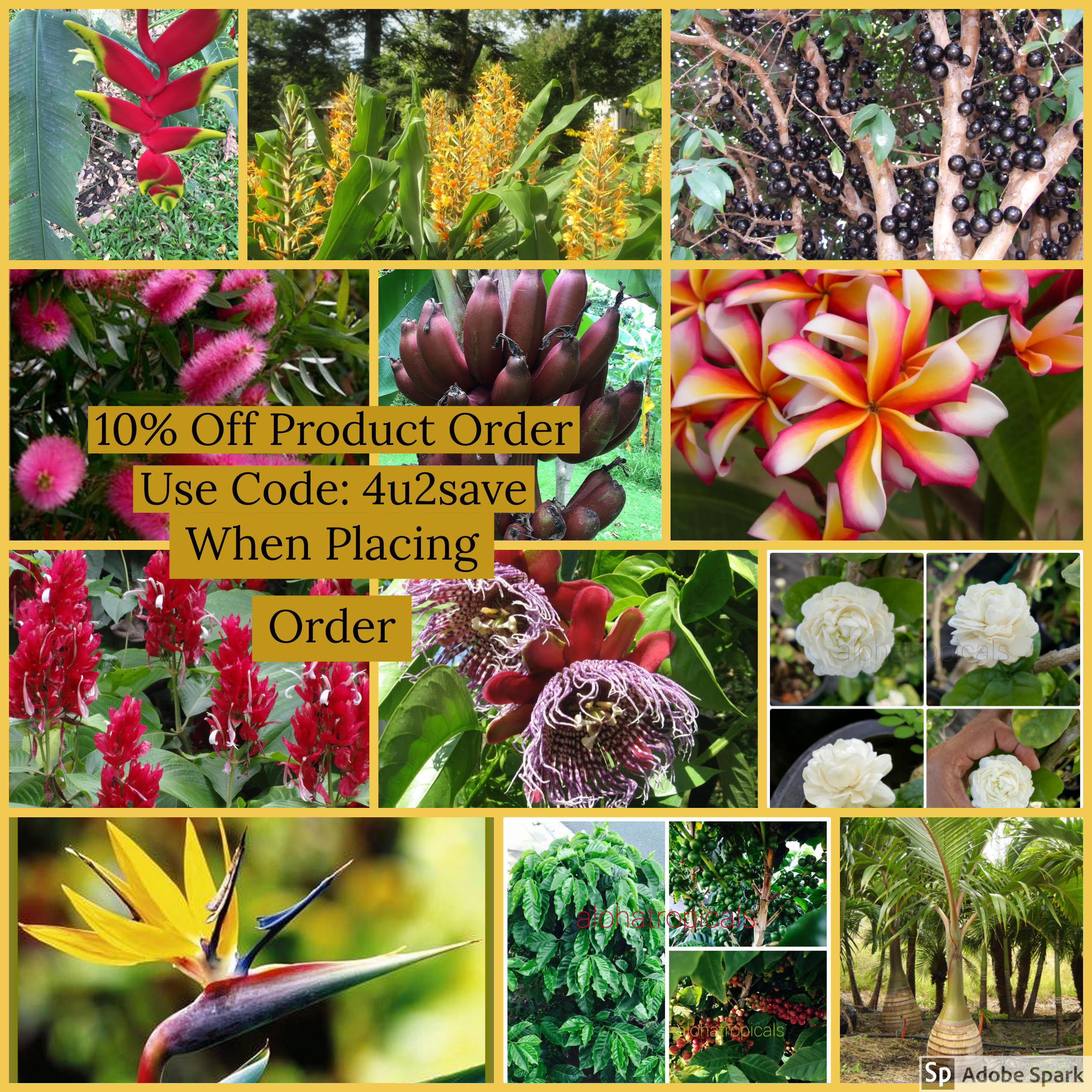 Tropical Plant Discounts